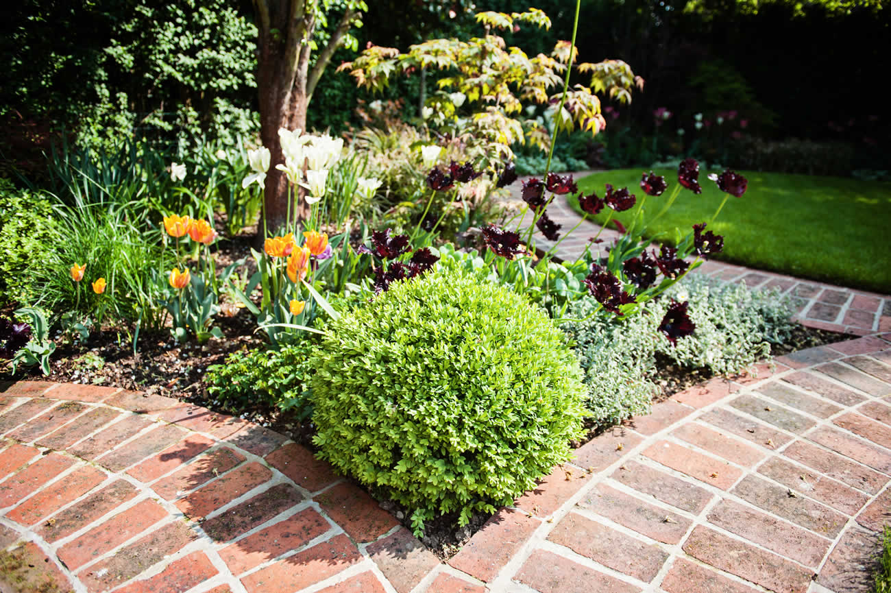 Hampstead garden design planting design of evergreen for Structural plants for small gardens